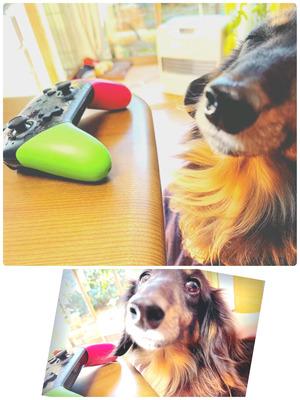 針生 ブログ 犬 (2021年7月).jpg